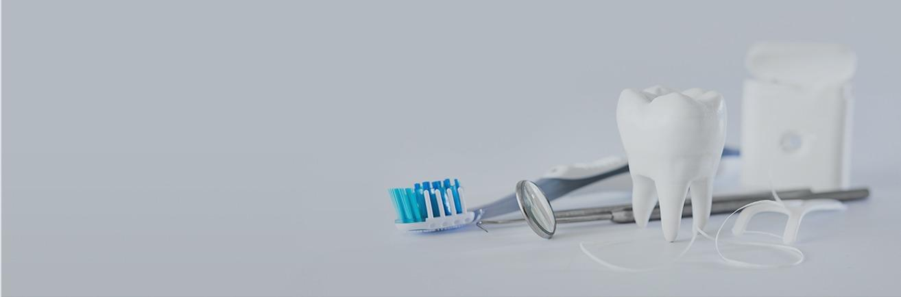 Model tooth and oral hygiene products